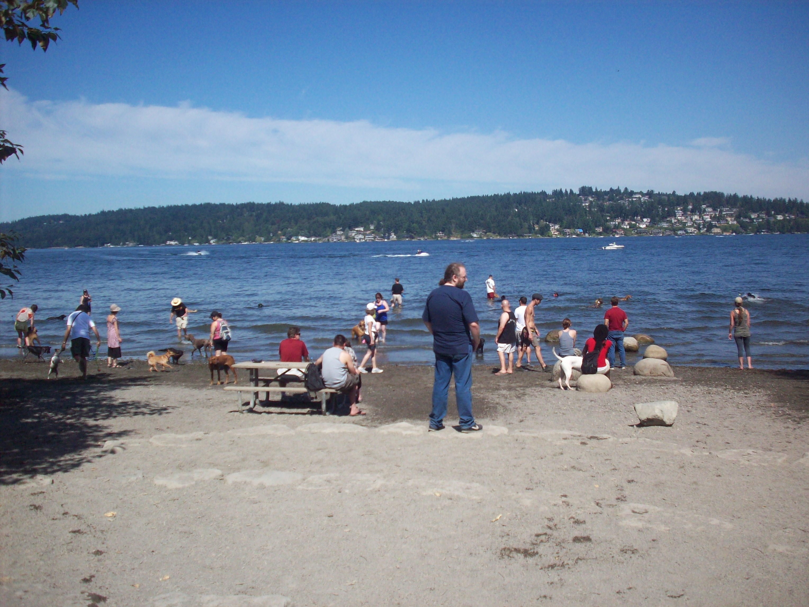 The Dog Beach at Magnussen Park, Seattle